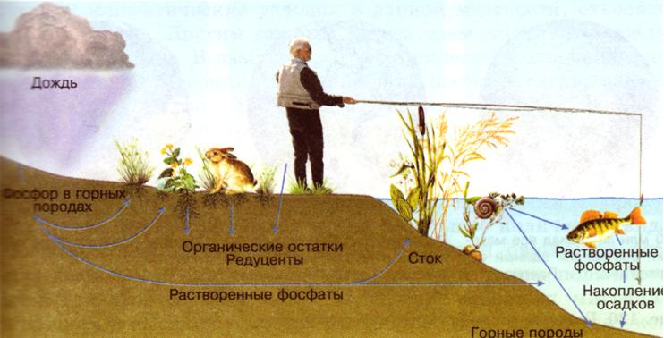 Картинки круговорот оксигена в природе